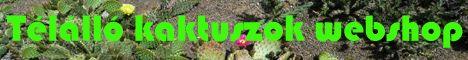 Kaktusz webshop